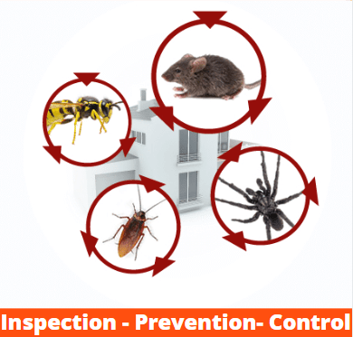 Pest Disinfection