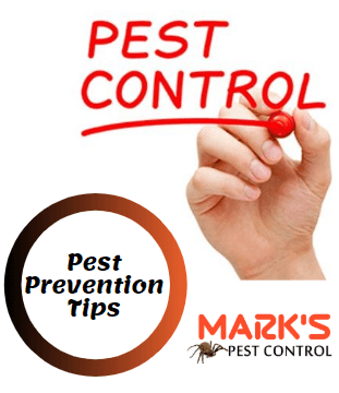 Pest prevention in Parramatta