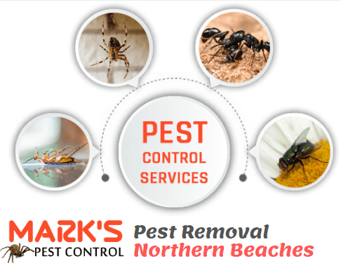 Cockroach Prevention Northern Beaches