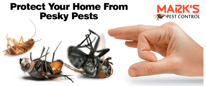 protect your home from pest