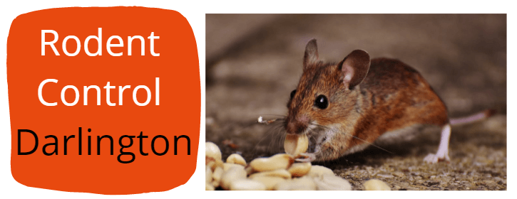 rodent Pest Control Darlington