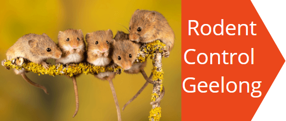 rodent control Geelong