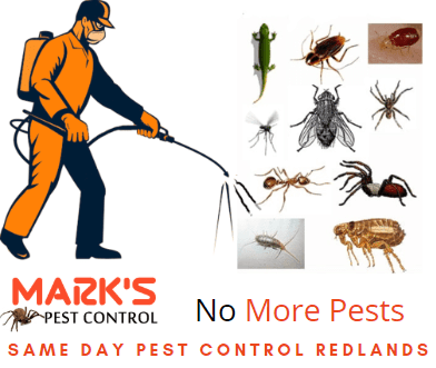 Same Day Pest Removal services