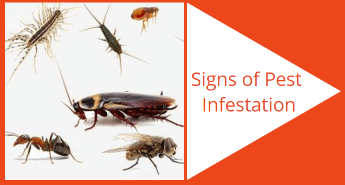 signs of pest infestation
