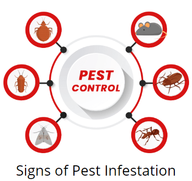signs of pest