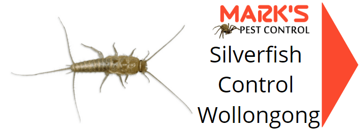 silverfish removal