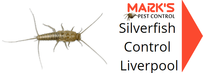 silverfish pest control liverpool