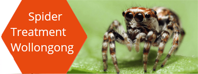 Spider removal Wollongong