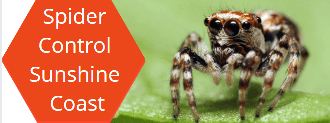 spider control sunshine coast