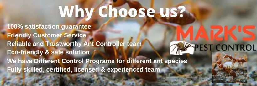 why choose marks ant control sydney