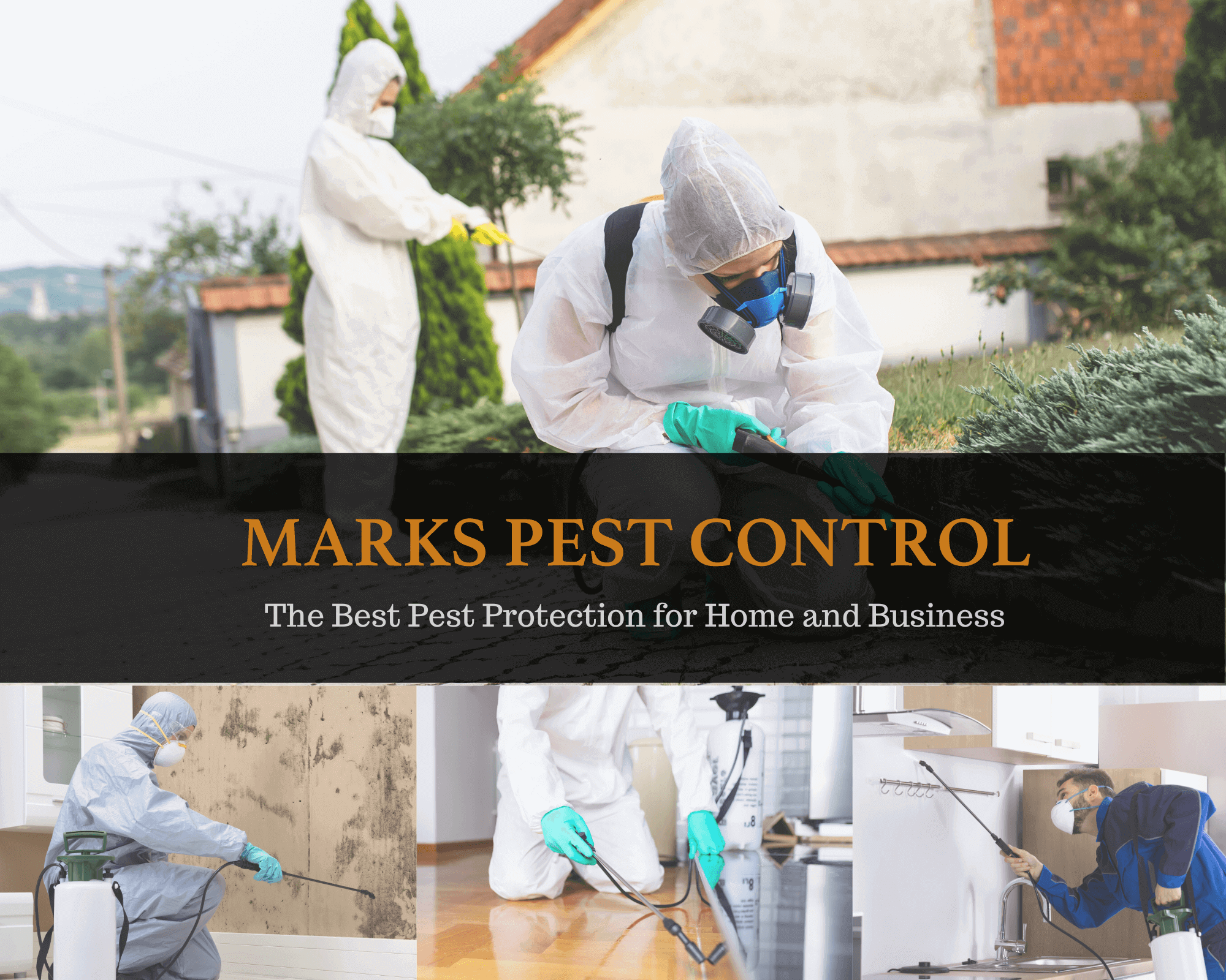 Pest Control Services for Your Home