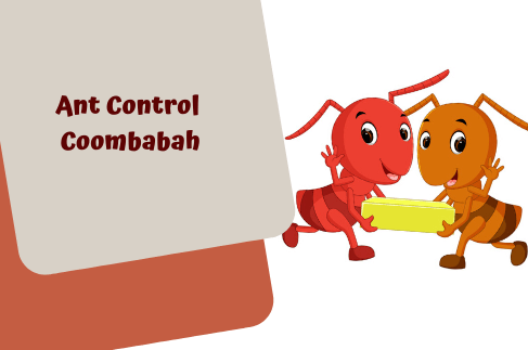 Ant Control Coombabah
