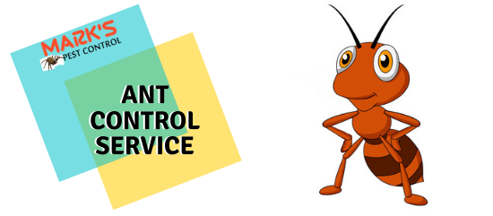 Ant Control service- Marks Pest Control