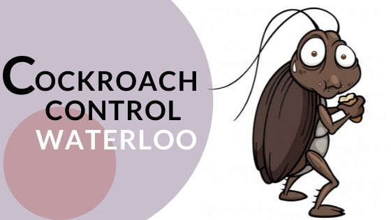 cockroach control waterloo