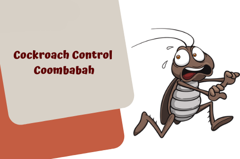 Cockroach Control Coombabah
