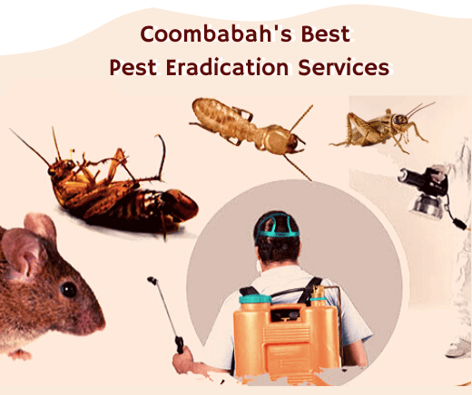 Pest control services coombabah