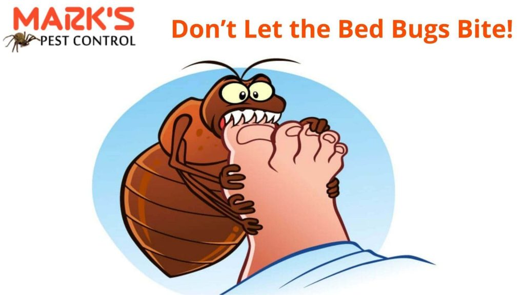don't let bed bugs bite