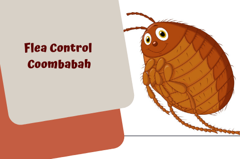 Flea Control Coombabah