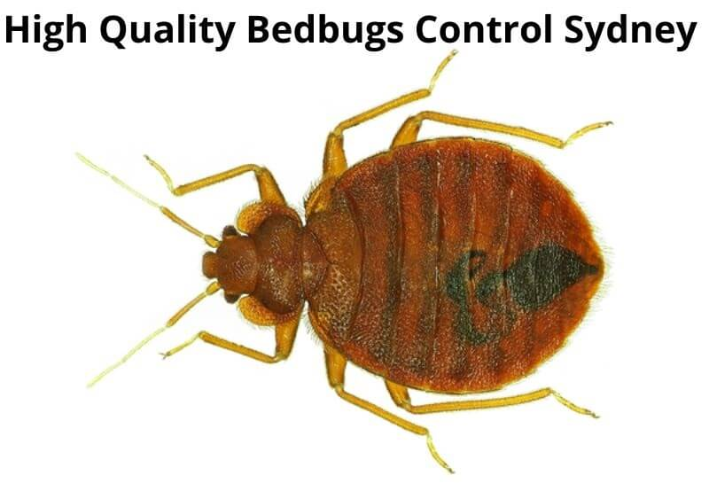high quality bedbugs control sydney