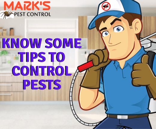 Marks Pest Control Tips