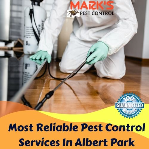Most Reliable Pest Control Services In Albert Park