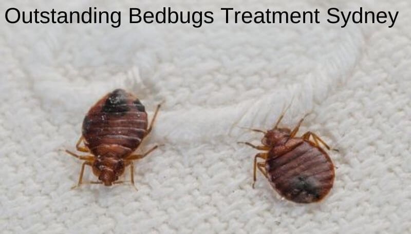 Outstanding bedbugs treatment sydney