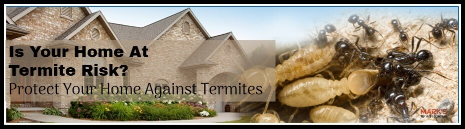 Protect Your Home Against Termites Marks