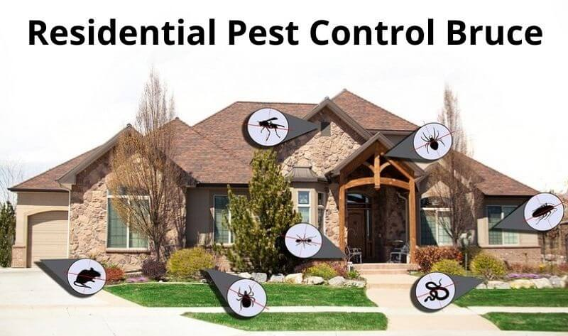 residential pest control bruce