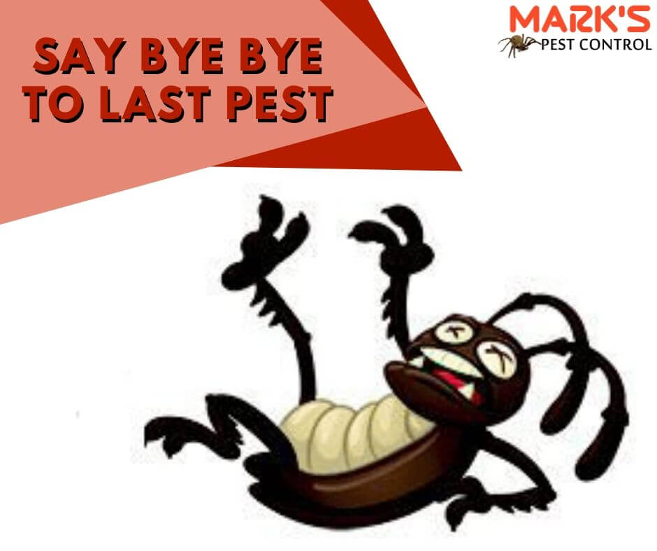 say bye bye to all pest