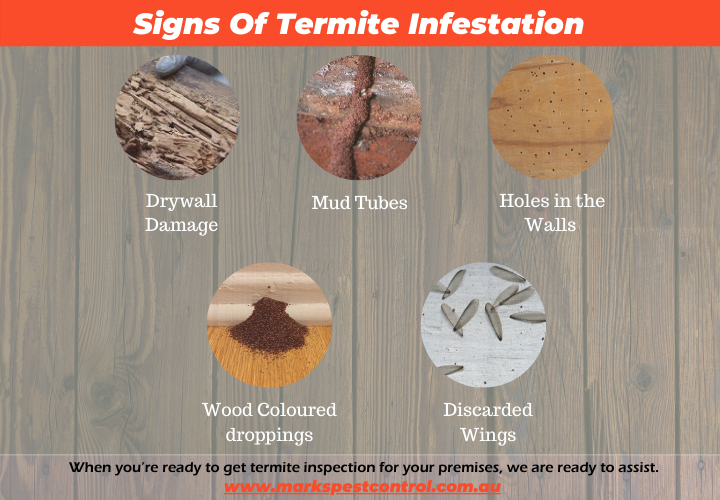 Signs of Termite Infestation