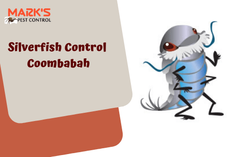 Silverfish Control Commbabah