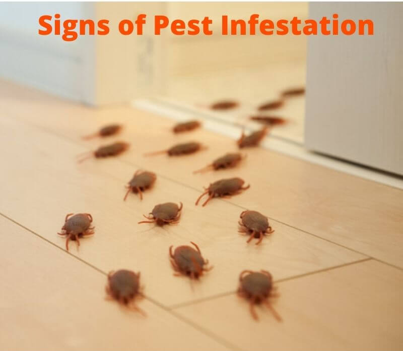 sign of pest infestation
