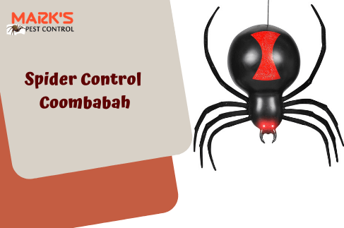 Spider Control Coombabah
