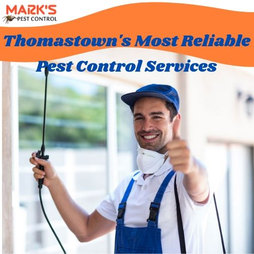 Thomastown's Most Reliable Pest Control Services