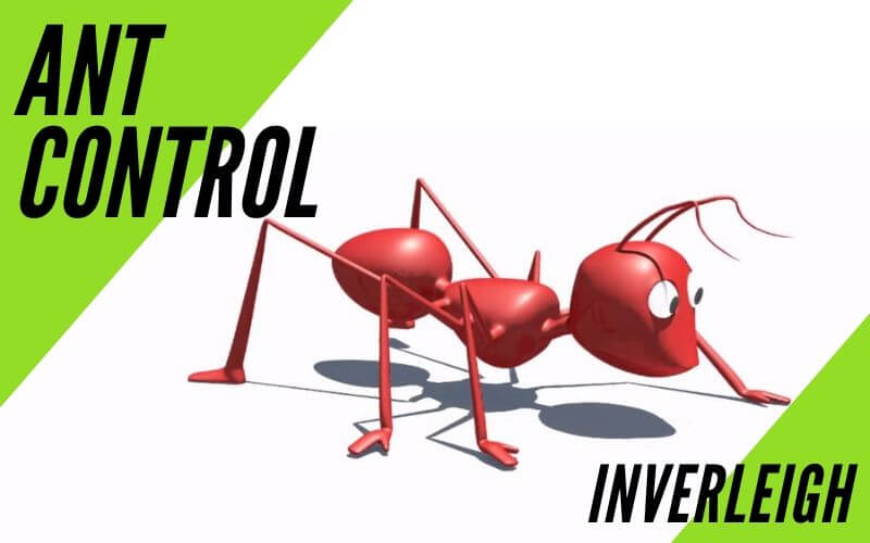 Ant control Inverleigh
