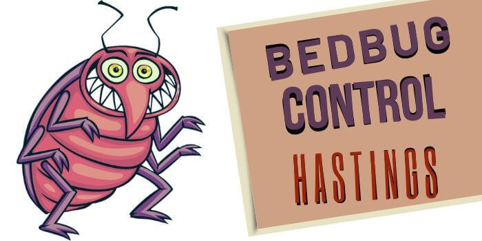 bedbugs control hastings