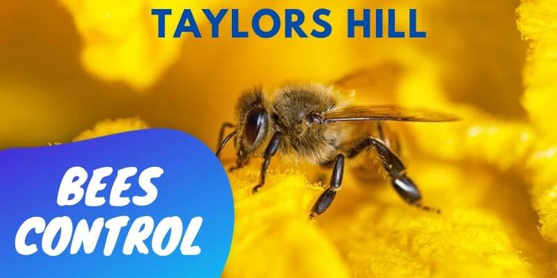 Bees control Taylors Hill