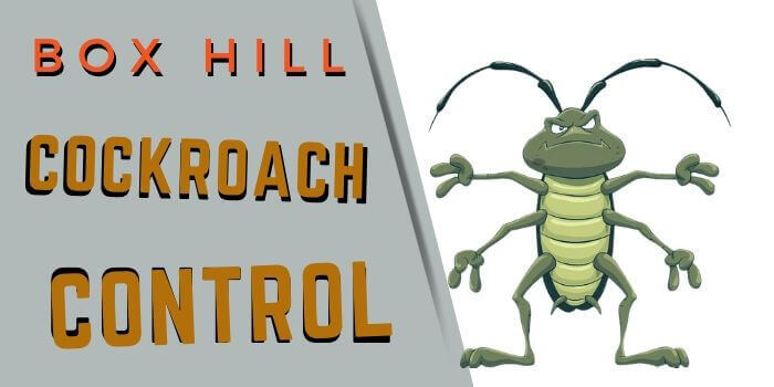 cockroach control box hill