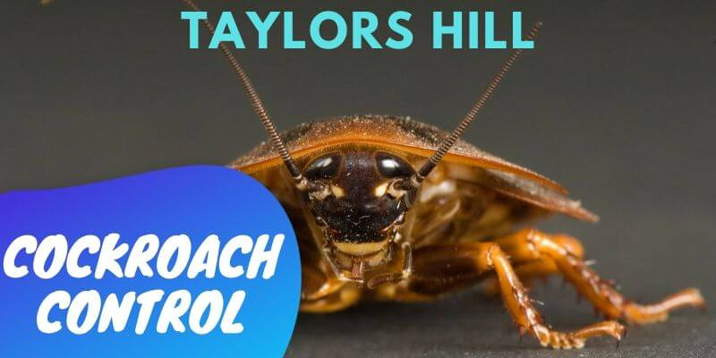 Cockroach control Taylors Hill
