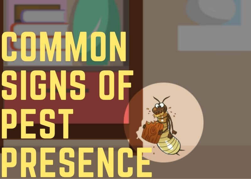 Common signs of Pest Infestation