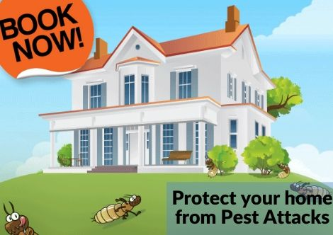 Residential Pest Control Currumbin Waters