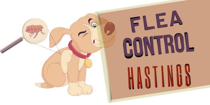 flea control hastings