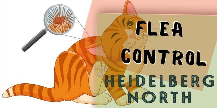 flea control Heidelberg North