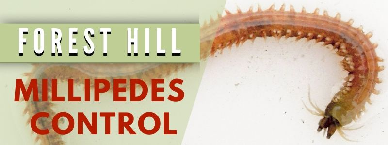 millipedes control forest hill