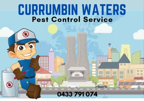 Pest Control Currumbin Waters