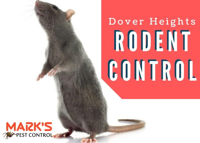 Rodent control Dover Heights