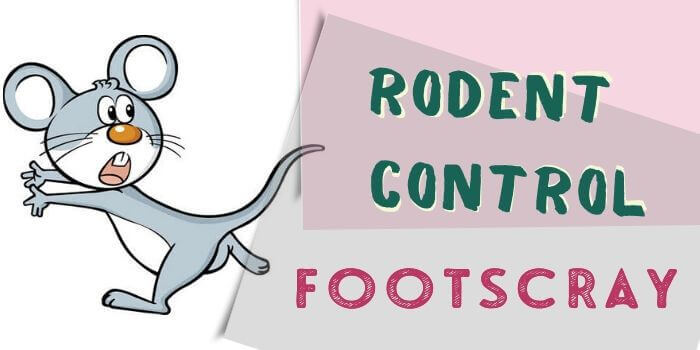 rodent control Footscray