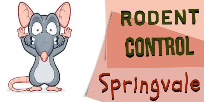 rodent control springvale