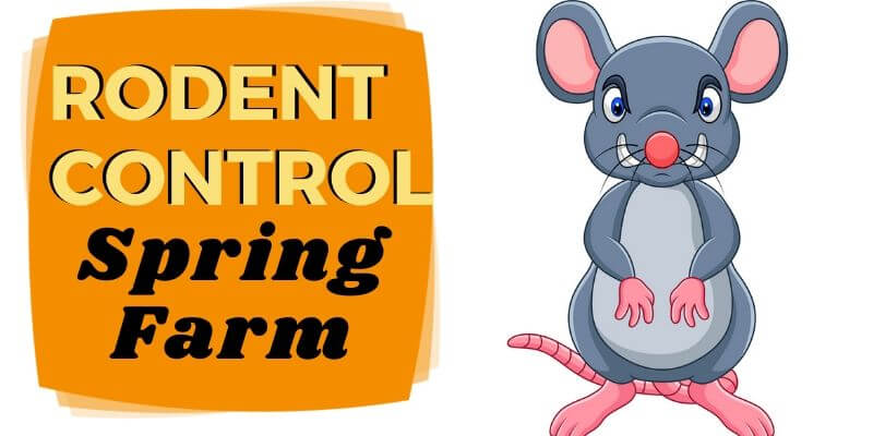 Rodent Control Spring Farm