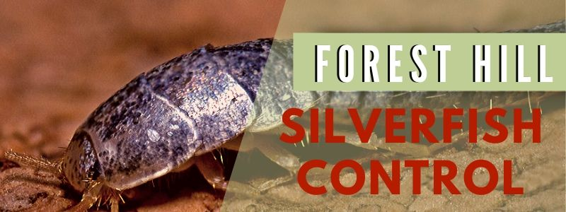 silverfish control forest hill